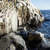 detay · uçurum · ağaç · kaya · taş · kayalar - stok fotoğraf © juhku