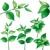 farklı · tür · bitkiler · yeşil · beyaz · yaprak - stok fotoğraf © jul-and