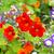 fényes · narancs · virágok · izzó · este · napfény - stock fotó © julietphotography
