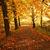 güzel · sonbahar · park · öğleden · sonra · sonbahar · yol - stok fotoğraf © Julietphotography