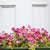 floral background of blooming purple pansies flowers stock photo © julietphotography