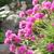 klein · rock · tuin · rotsen · alpine · planten - stockfoto © julietphotography