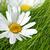 bella · fiori · giardino · fiore · natura · bellezza - foto d'archivio © julietphotography