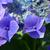 niebieski · kwiat - zdjęcia stock © julietphotography