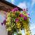 suspendu · fleur · panier · coloré · extérieur · de · la · maison · maison - photo stock © julietphotography