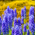 цветы · синий · серый · bokeh · Пасху · цветок - Сток-фото © julietphotography