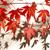 japonês · bordo · outono · vermelho · folhas - foto stock © julietphotography