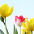 spring tulips stock photo © julietphotography