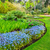 beautiful botanic garden in spring beautiful corydalis flexuosa in full bloom close up stock photo © julietphotography