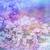 夢のような · 美しい · フローラル · ぼけ味 · ライト · テクスチャ - ストックフォト © Julietphotography
