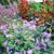 fiori · annuale · perenne · impianti · famiglia · natura - foto d'archivio © julietphotography