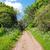boom · pad · groene · bos · voorjaar - stockfoto © julietphotography
