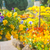 beautiful yellow pansy flowers in hanging basket stock photo © julietphotography