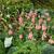 friss · retek · föld · zöldség · kert · zöld - stock fotó © julietphotography