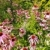 roxo · usado · imune · saúde · verão - foto stock © julietphotography