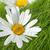 美しい · 草 · 庭園 · 詳細 · 花 · 春 - ストックフォト © julietphotography