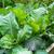 салата · растущий · почвы · весны · природы · зеленый - Сток-фото © julietphotography