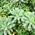 サボテン · 花 · 自然 · 庭園 · 葉 - ストックフォト © julietphotography