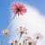 blauwe · hemel · mooie · paars · bloemen · weide · voorjaar - stockfoto © julietphotography