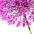beautiful blooming allium close up stock photo © julietphotography