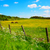 cavalos · verde · amarelo · primavera · prado · Valência - foto stock © julietphotography