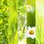 primavera · collage · hermosa · flores · flor · luz - foto stock © julietphotography
