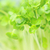close up of fresh garden cress leaves stock photo © julietphotography
