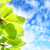 beautiful spring leaves background stock photo © julietphotography