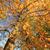 beautiful autumnal landscape stock photo © julietphotography