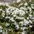 közelkép · fotó · tavasz · természet · szépség · növény - stock fotó © julietphotography