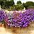 hanging basket with lobelia flowers stock photo © julietphotography