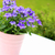 красивой · фиолетовый · цветы · ярко · закат · цветочный - Сток-фото © julietphotography