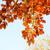 güzel · sonbahar · yaprakları · mavi · gökyüzü · gökyüzü · doğa - stok fotoğraf © Julietphotography