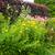 caminho · jardim · luxuriante · verão · flores - foto stock © julietphotography