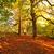 güzel · sonbahar · park · adam · öğleden · sonra · sonbahar - stok fotoğraf © Julietphotography