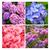 közelkép · kék · virág - stock fotó © julietphotography