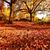 güzel · sonbahar · park · öğleden · sonra · sonbahar · manzara - stok fotoğraf © Julietphotography