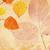 folhas · agave · suculento · planta · natureza - foto stock © julietphotography