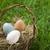easter eggs in basket stock photo © kajura