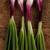 orgânico · saudável · verde · cebolas · mulher - foto stock © kalozzolak