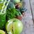 jabłko · koper · szkła · zdrowia · zielone - zdjęcia stock © karaidel