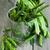 bonen · groene · bonen · erwten · klein · oud · hout - stockfoto © Karaidel