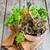 verde · salada · alface · azeite · velho · mesa · de · madeira - foto stock © Karaidel