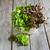verde · salada · alface · velho · mesa · de · madeira · foco - foto stock © Karaidel