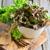 azeite · verde · salada · mão · alface · velho - foto stock © Karaidel