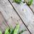 hoek · bonen · erwten · groene · oud · hout - stockfoto © Karaidel