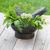 fresh herbs in mortar stock photo © karandaev