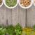 rojo · caoba · semillas · colección · secar · hierbas - foto stock © karandaev