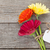 drie · kleurrijk · bloemen · tag · houten · tafel · natuur - stockfoto © karandaev
