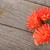 オレンジ · デイジーチェーン · 花 · 孤立した · 白 · 赤 - ストックフォト © karandaev